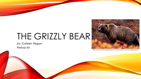 THE GRIZZLY BEAR by: Colleen Regan Period 4A