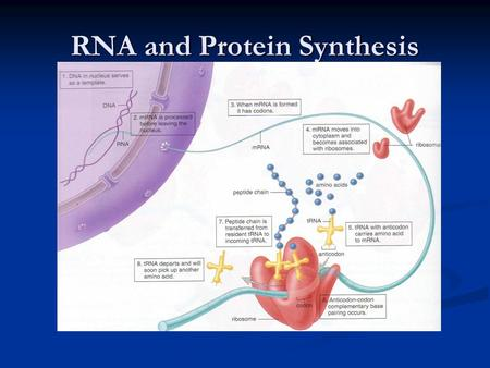 RNA and Protein Synthesis What is a gene? A region of DNA that contains instructions for the making of proteins. A region of DNA that contains instructions.