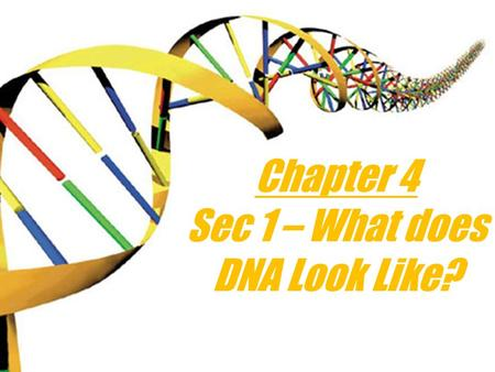 Chapter 4 Sec 1 – What does DNA Look Like? DNA stands for… Deoxyribonucleic acid.