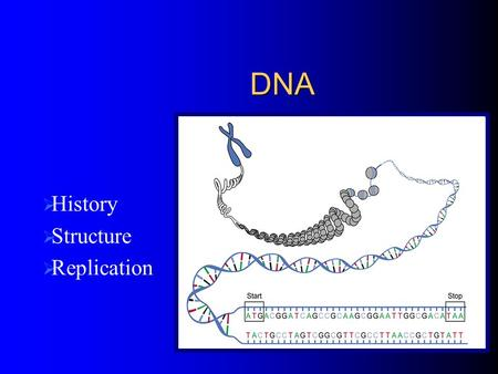 DNA  History  Structure  Replication. History of DNA Scientists thought protein was the heredity material Several Scientists disproved this and proved.