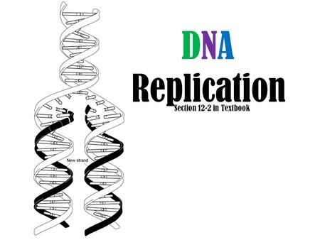 DNA Replication Section 12-2 in Textbook. ANIMAL CELL.