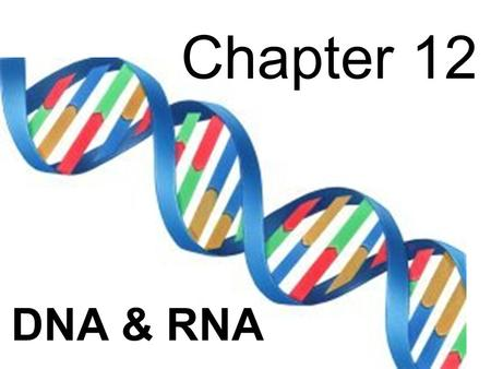 Chapter 12 DNA & RNA.