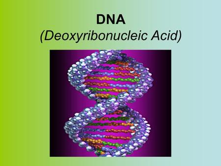 DNA (Deoxyribonucleic Acid). A HISTORY OF DNA DNA double helixDiscovery of the DNA double helix A. Frederick Griffith – Discovers that a factor in diseased.