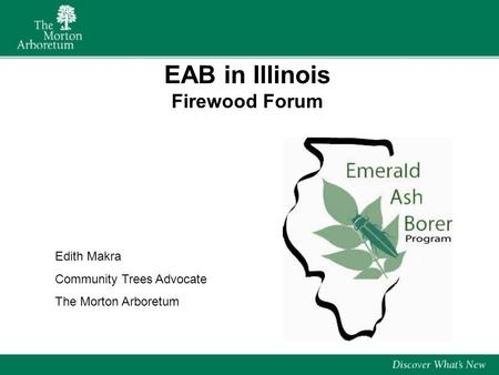 EAB in Illinois Firewood Forum Edith Makra Community Trees Advocate The Morton Arboretum.