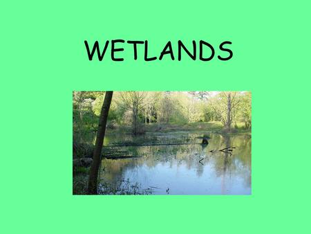 WETLANDS. What are wetlands? A wetland is a water resource that has three characteristics: Wetland hydrology Wetland soils Wetland plants.