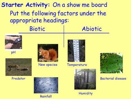 Starter Activity: On a show me board