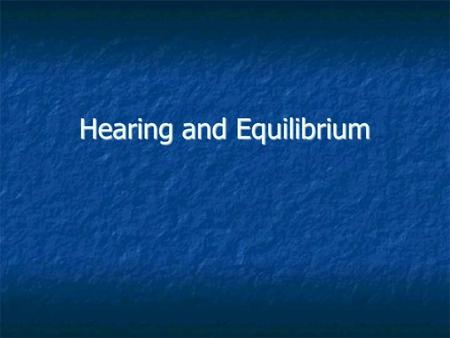 "Hearing and Equilibrium. Outer Ear Auricle– ""ear"" shell- shaped, surrounds external opening to auditory canal Auricle– ""ear"" shell- shaped, surrounds."