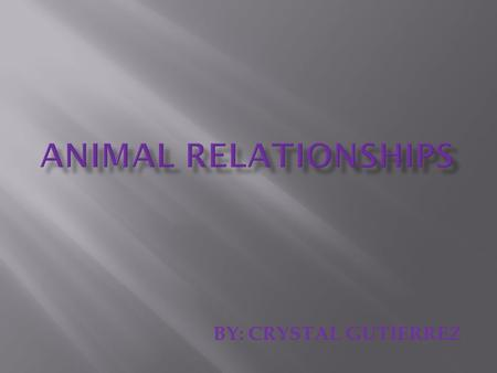 ANIMAL relationships BY: CRYSTAL GUTIERREZ.