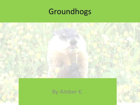 Groundhogs By Amber K. W HAT IS A G ROUNDHOG ? A groundhog is a woodchuck. They are Considered Rodents. Officially known to the marmot family Marmota.