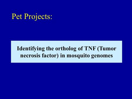 Identifying the ortholog of TNF (Tumor necrosis factor) in mosquito genomes Pet Projects: