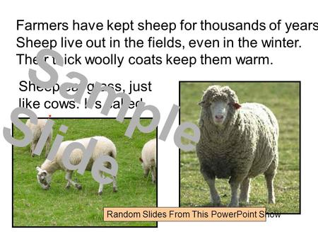Farmers have kept sheep for thousands of years. Sheep live out in the fields, even in the winter. Their thick woolly coats keep them warm. Sheep eat grass,