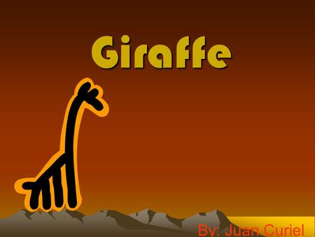 Giraffe By: Juan Curiel. My Animal Giraffes are very tall creature they are very tall mammals with unbelievably long necks and very long tongues with.