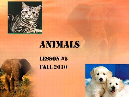 Animals Lesson #5 Fall 2010. African animals Elephant Hippo Zebra Elk Rhino Monkey Giraffe Bear.