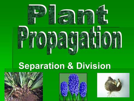 Separation & Division. Quick Facts:  Propagation is accomplished by the use of underground plant parts.  These parts have two functions: #1 Food Storage.