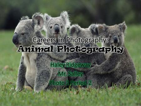 What is Animal Photography? How can I become an animal photographer??