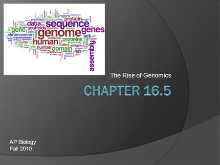 The Rise of Genomics AP Biology Fall 2010. The Human Genome Project  With the invention of PCR and automated sequencing, scientists argued for the sequencing.