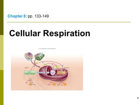 1 Cellular Respiration Chapter 8: pp. 133-149 Electron transport chain and chemiosmosis Mitochondrion Citric acid cycle Preparatory reaction 232 ADP or.