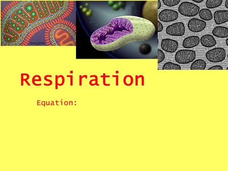 Respiration Equation:. Oxidation / Reduction What is oxidation? What is reduction? Key Idea: When something is reduced it gains electrons and protons.