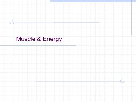Muscle & Energy Intro A single muscle fiber contains 15 billion thick filaments During active contraction, 2500 ATP molecules are used-PER SECOND!! muscles.