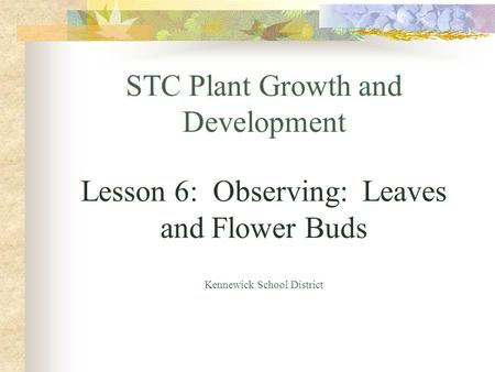 STC Plant Growth and Development Lesson 6: Observing: Leaves and Flower Buds Kennewick School District.