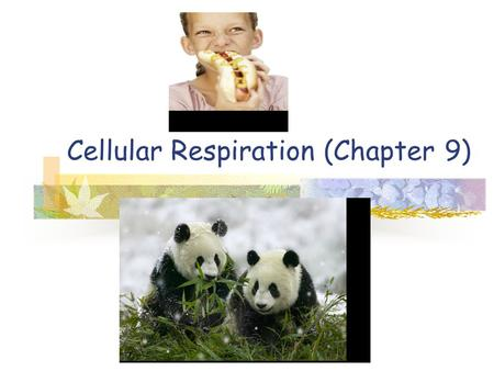 Cellular Respiration (Chapter 9). Energy source Autotrophs: Producers Plants, algae and some bacteria Make own organic molecules Heterotrophs: Consumers.
