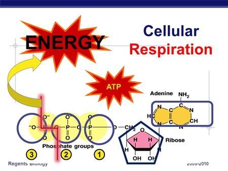 Regents Biology 2009-2010 Cellular Respiration ENERGY ATP 123.