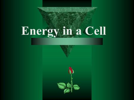 Energy in a Cell All Cells Need Energy  Cells need energy to: –Make new molecules. –Build membranes and organelles. –Move molecules in and out of the.