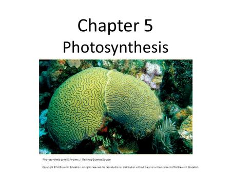 Chapter 5 Photosynthesis Photosynthetic coral © Andrew J. Martinez/Science Source Copyright © McGraw-Hill Education. All rights reserved. No reproduction.
