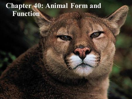 Copyright © 2005 Pearson Education, Inc. publishing as Benjamin Cummings Chapter 40: Animal Form and Function.