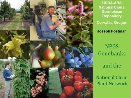 United States Department of Agriculture Animal and Plant Health Inspection Service Plant Protection and Quarantine USDA-ARS National Clonal Germplasm Repository.