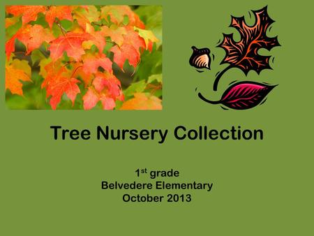 Tree Nursery Collection 1 st grade Belvedere Elementary October 2013.