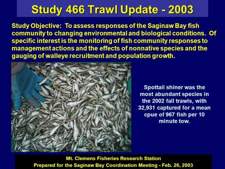 Study 466 Trawl Update - 2003 Mt. Clemens Fisheries Research Station Prepared for the Saginaw Bay Coordination Meeting - Feb. 26, 2003 Spottail shiner.
