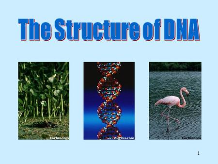 1 2 DNA DNA.DNA is the blueprint of life. DNA contains the instructions for making proteins.