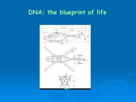 Dna the blueprint of life ppt video online download dna the blueprint of life where do you get your dna dna is malvernweather Images