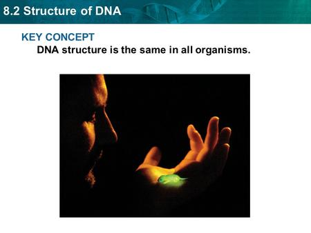 8.2 Structure of DNA KEY CONCEPT DNA structure is the same in all organisms.