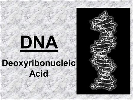 DNA Deoxyribonucleic Acid. DNA is our genetic code. DNA is located in the nucleus of every living cell in our bodies.