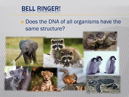  Does the DNA of all organisms have the same structure?