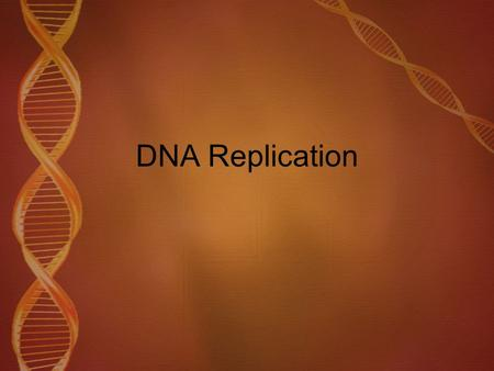 DNA Replication. Watch this video to see how DNA replication actually occurs.  ch?v=hfZ8o9D1tushttp://www.youtube.com/wat ch?v=hfZ8o9D1tus.