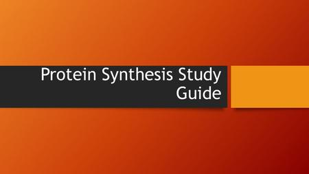 Protein Synthesis Study Guide