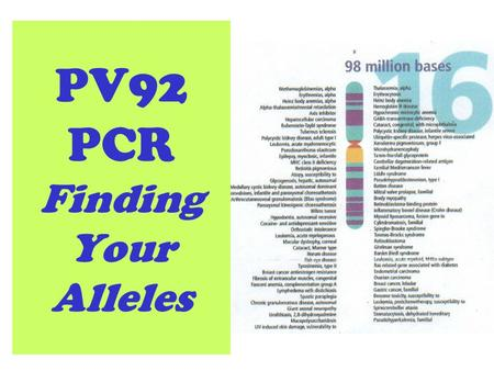 PV92 PCR Finding Your Alleles. Listed here are functional genes (genes that code for proteins). PV92 is not functional (as far as we know) so it is not.