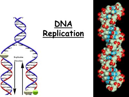 DNA Replication. But first a little review!  DNA is made up of subunits called NUCLEOTIDES or  each nucleotide is made up of 3 basic parts: * 5-carbon.