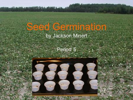 Seed Germination by Jackson Minert Period 5. Introduction My mom likes to sprout alfalfa seeds at home to eat on sandwiches. She soaks the seeds in water.