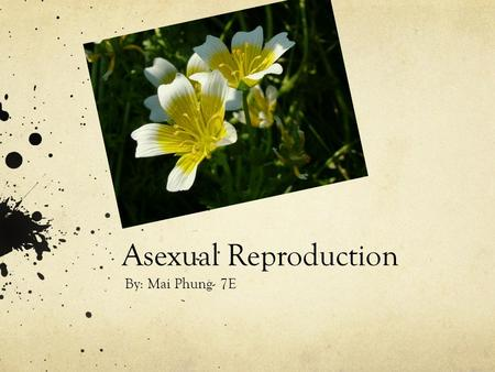 Asexual Reproduction By: Mai Phung- 7E. What is Asexual Reproduction? Asexual reproduction is a mode of reproduction by which offspring arise from a single.