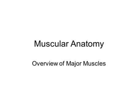 Muscular Anatomy Overview of Major Muscles. ©Thompson Educational Publishing, Inc. 2003. All material is copyright protected. It is illegal to copy any.