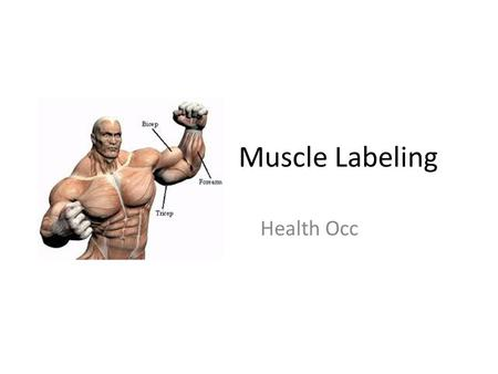 Muscle Labeling Health Occ.