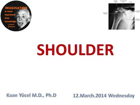 SHOULDER Kaan Yücel M.D., Ph.D 12.March.2014 Wednesday.