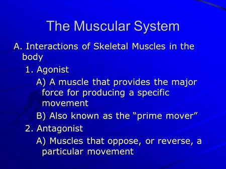 The Muscular System A. Interactions of Skeletal Muscles in the body 1. Agonist A) A muscle that provides the major force for producing a specific movement.