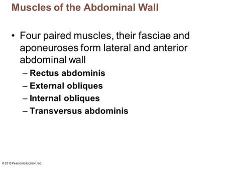 © 2013 Pearson Education, Inc. Muscles of the Abdominal Wall Four paired muscles, their fasciae and aponeuroses form lateral and anterior abdominal wall.