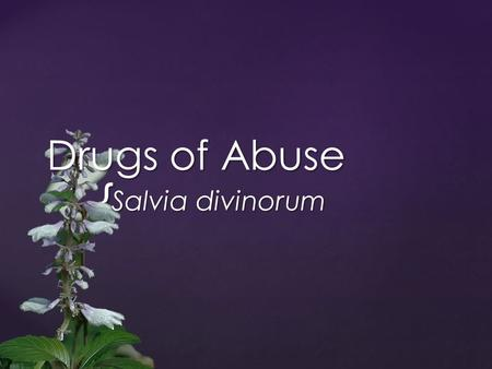 { Drugs of Abuse Salvia divinorum. { Native to southern Mexico Divinity rituals Healing rituals Hallucinogen First recorded in 1939 Only illegal in 5.