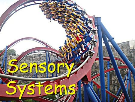 Sensory Systems. How many different sensory receptors are hard at work during a roller coaster ride?